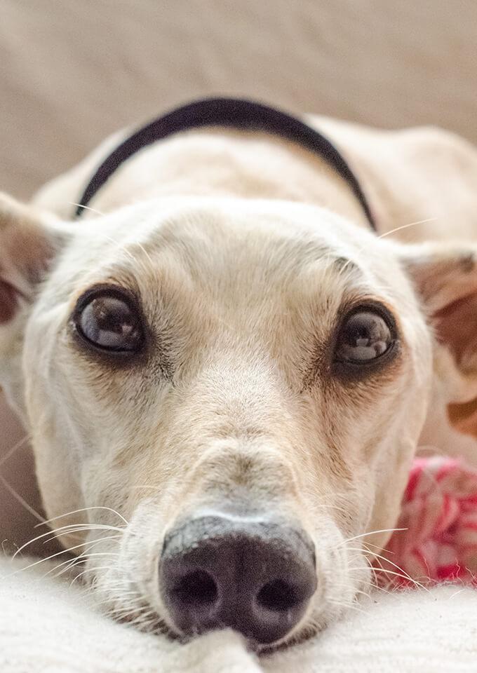 K9 Bytes Fleece Dog Collars