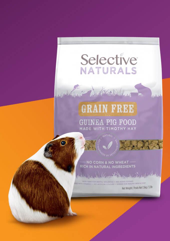 Wholesale Guinea Pig Food