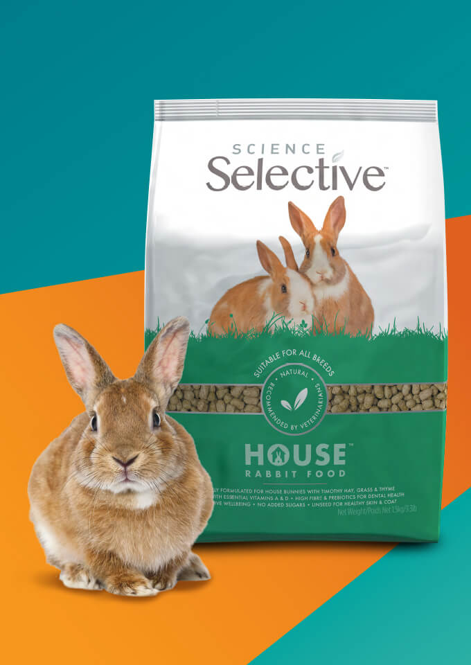 Wholesale Rabbit Food