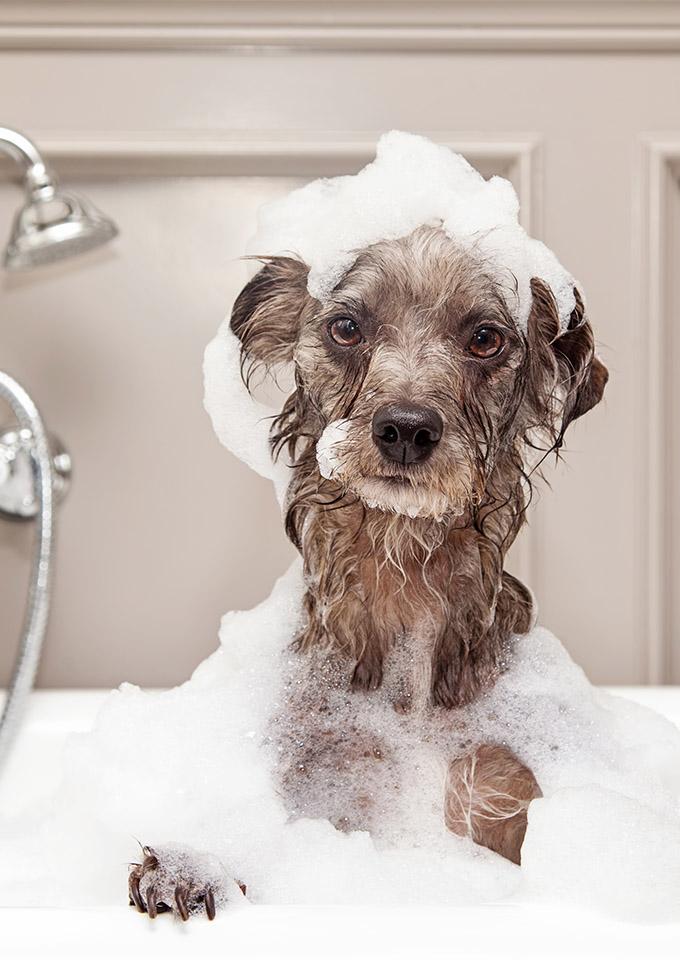 Glo-marr Dog Shampoo & Conditioner